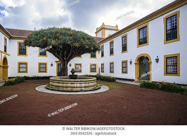 Portugal, Azores, Terceira Island, Angra do Heroismo, Palacio Capitaes Generais palace, courtyard with ancient dragon tree