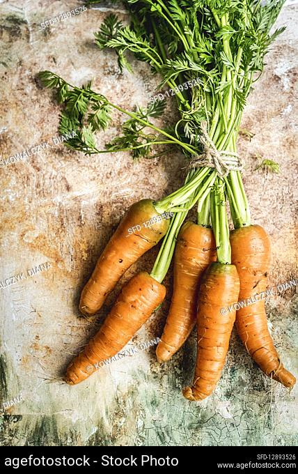 Fresh carrots moistened with water on a brown-green background