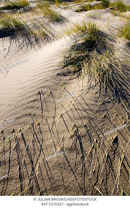 patterns made by grass and wind on a sand dune