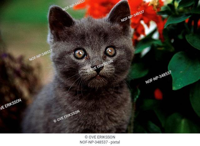 A startled kitten