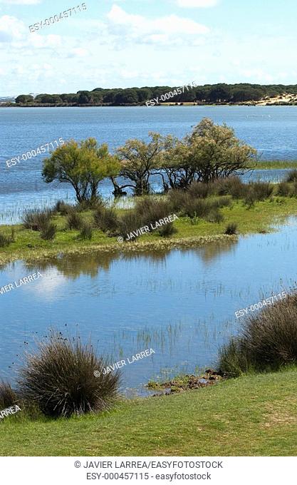 Wetlands. Doñana National Park. Huelva province. Spain
