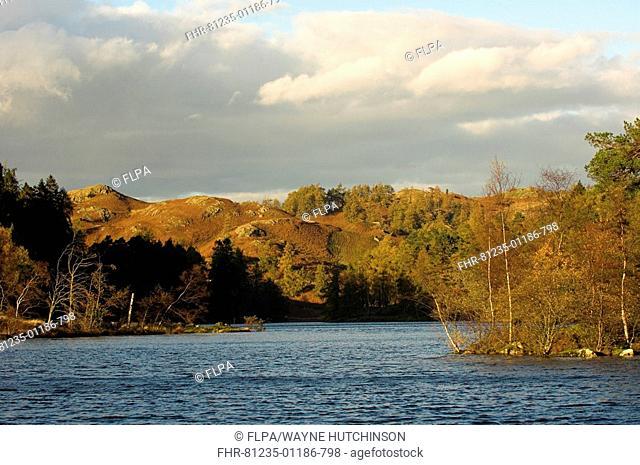 Evening light over lake, Tarn Hows, Lake District, Cumbria, England, autumn