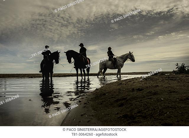 Silhouettes of horses in the river .Valencia, Spain