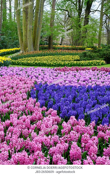 Garden Design in Spring, Keukenhof, Netherlands, Holland