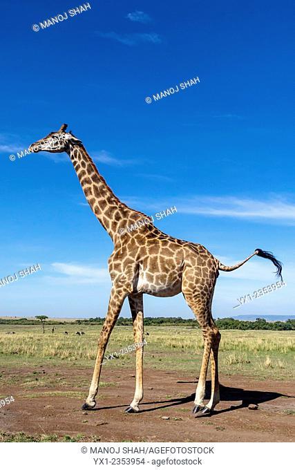 Giraffe enjoying the early morning sun