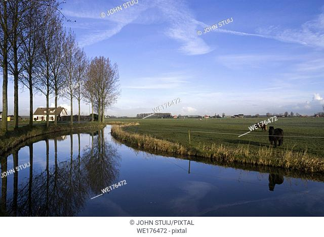 Row of trees along a canal with two horses standing on the other side