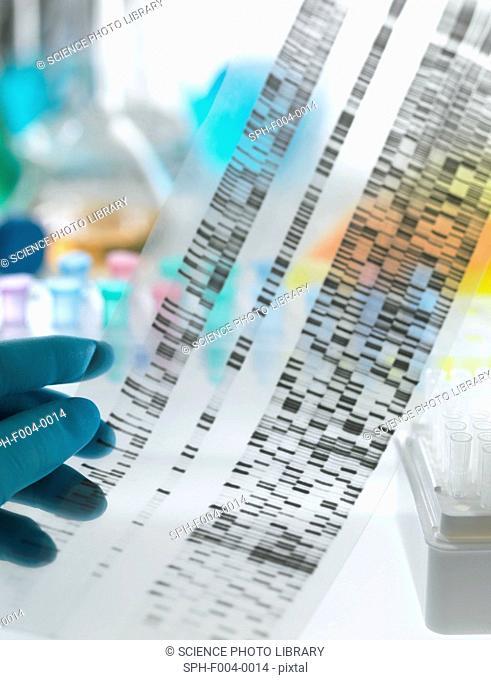 Genetic research. DNA deoxyribonucleic acid autoradiogram