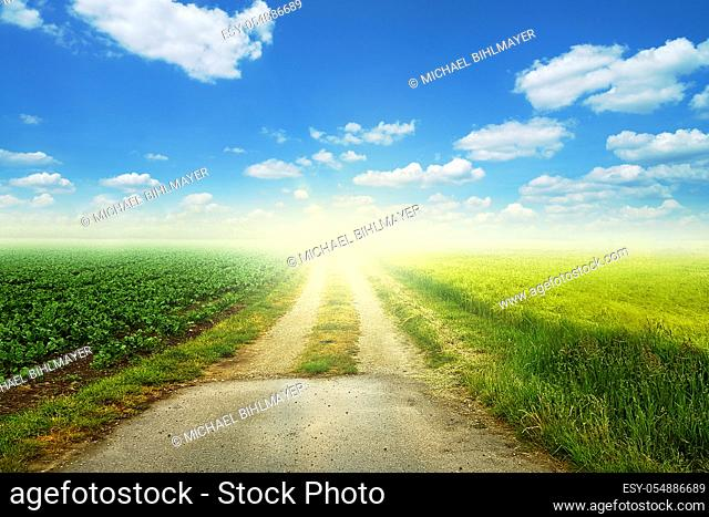 dirt road that leads straight out. green meadow to the side of the path that leads into the distance. blue sky with white clouds and shine sun