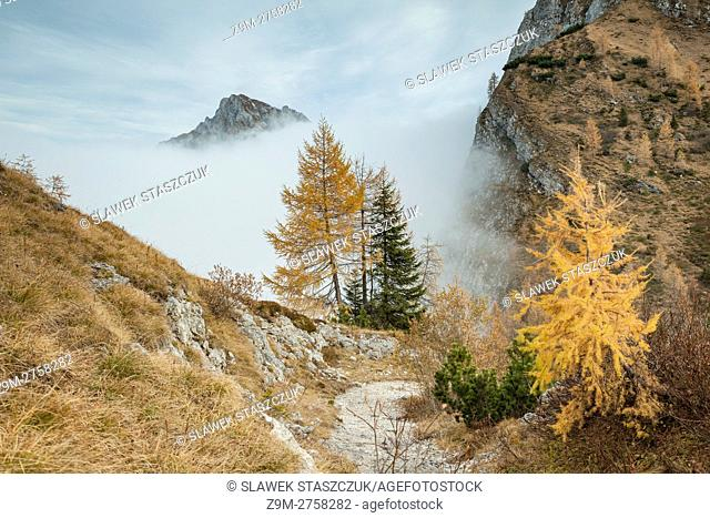 Misty autumn afternoon in Carnic Alps near Sappada, Belluno province, Veneto, Italy