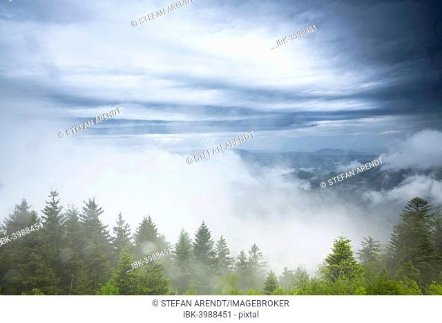 Stormy atmosphere with fog after heavy rain falls on the Schliffkopf mountain, Black Forest, Baden-Württemberg, Germany