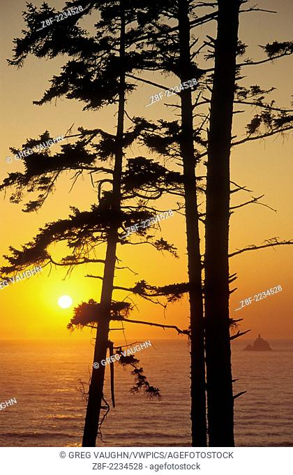 Pine trees and Tillamook Rock at sunset from Ecola State Park, northern Oregon coast