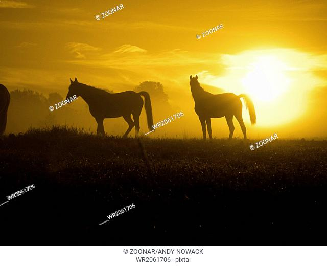 horses come in the Sunrise-toned