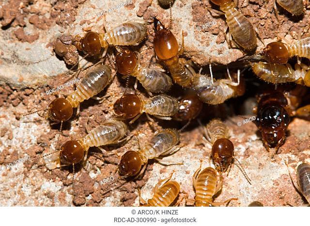 Termites, Mooi River Falls, KwaZulu Natal, South Africa