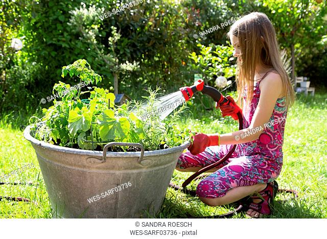 Girl using garden hose for watering planted herbs in zinc tub in the garden