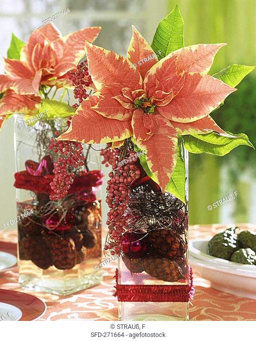Poinsettias in glass vases with berries and cones