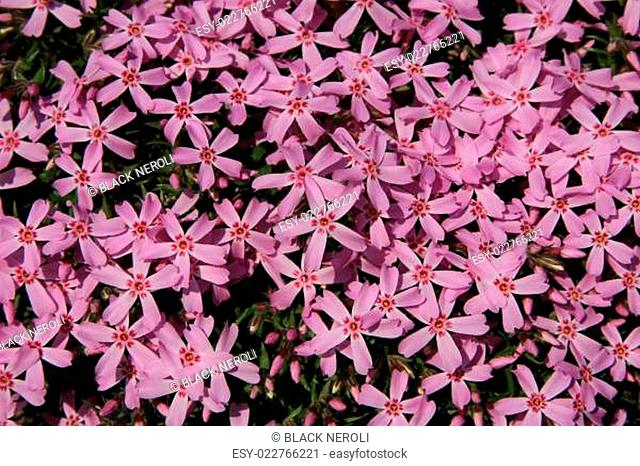 Beautiful spring flowers, floral background