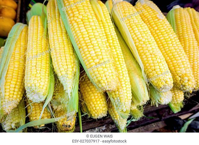fresh corn. Corn for sale at farmers market