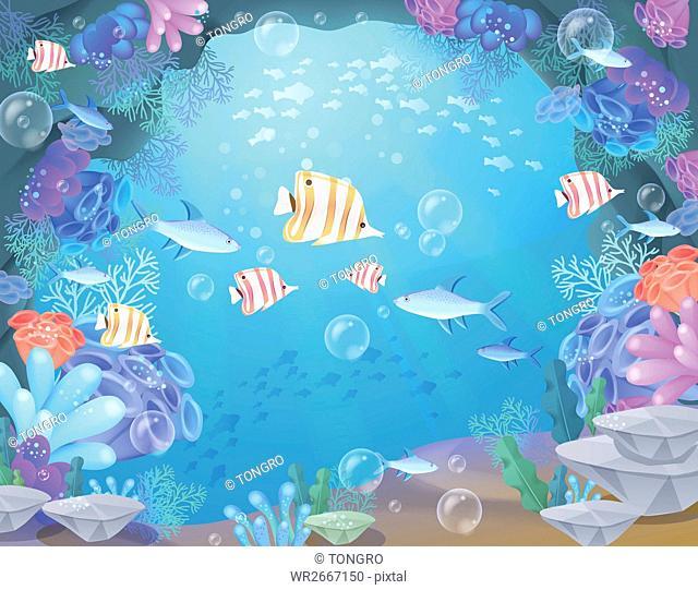 Various sea creatures underwater
