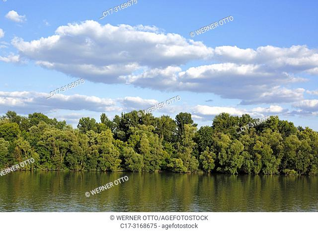 Budapest, Danube landscape in northern Budapest, river landscape, Danube bank, woodland, evening, cumulus clouds, Hungary, Central Hungary, Capital City