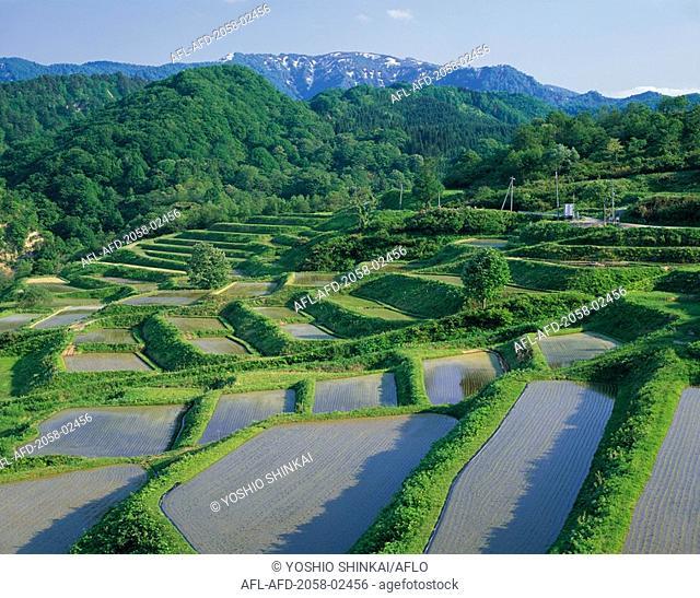 Terraced Rice Field, Shikamura, Yamagata Prefecture
