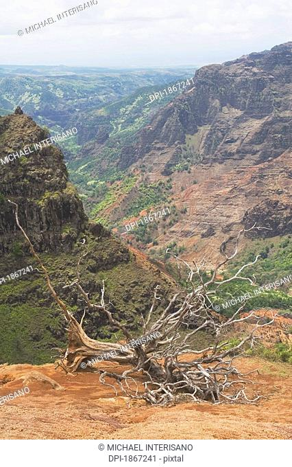 dead tree, waimea canyon state park, kauai, hawaii, usa