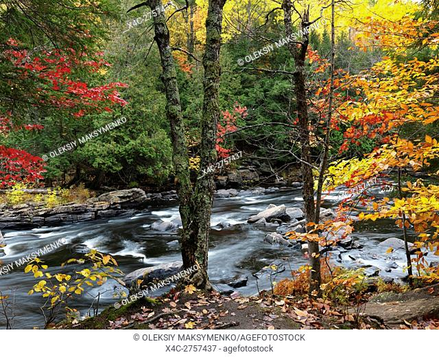 Beautiful fall nature scenery of Oxtongue river rapids. Algonquin, Muskoka, Ontario, Canada