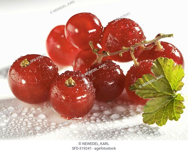 Fresh redcurrants with drops of water