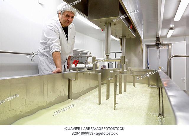 Making cheese from sheep's milk Latxa  Designation of origin 'Idiazabal'  Cheese factory  Gomiztegi Baserria, Arantzazu, Oñati, Gipuzkoa, Basque Country, Spain