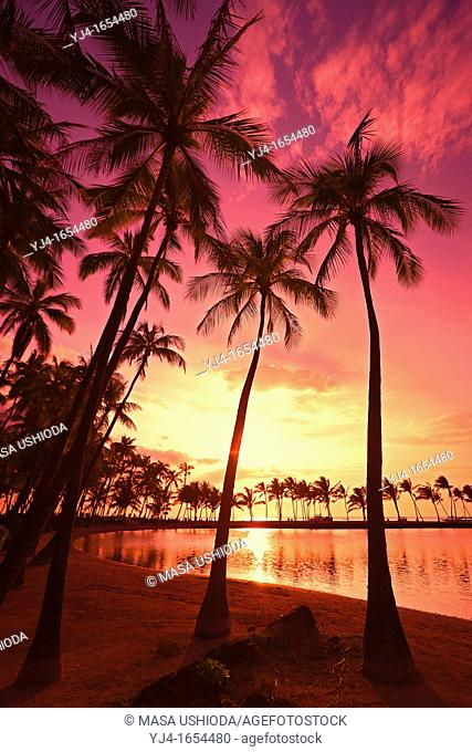 silhouette of coconut palm trees, Cocos nucifera, and Kuualii Anchialine Fishpond, Anaehoomalu Beach at sunset, Waikoloa, Kohala Coast, Big Island, Hawaii, USA