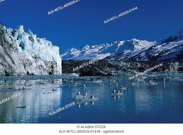 Calving Glacier W/&W/out Kayaker Glacier Bay National Park Southeast Alaska Summer Margerie Glacier