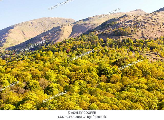 Woodland on the slopes of Fairfield from Loughrigg Terrace in the Lake district National Park, UK