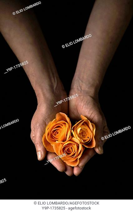 Woman's hands holding flowers