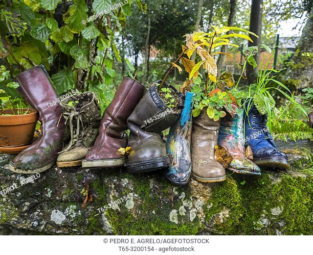 Trees planted in boots on a wall. Chantada. Lugo. Galicia. Date: 2018-11-09