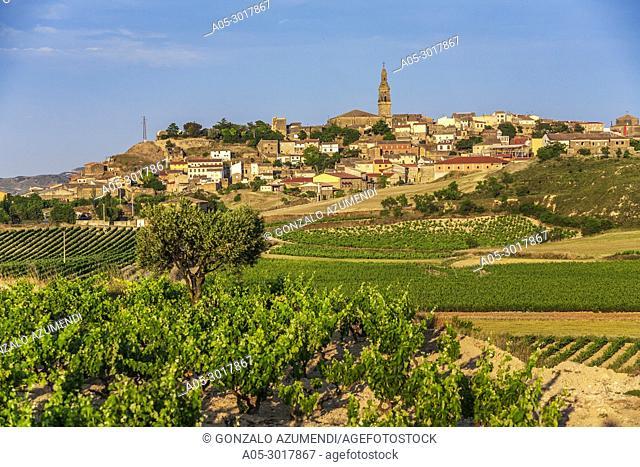Vineyards. Briones village. La Rioja. Spain