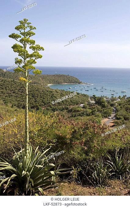 Agave & Antigua Coastline, View from Shirley Heights, Antigua