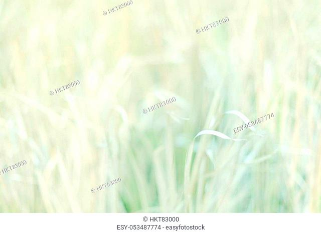 Selective soft focus meadow on sweet vintage colour filter. Abstract background