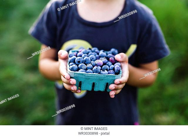 Close up of child holding punnet of fresh blueberries