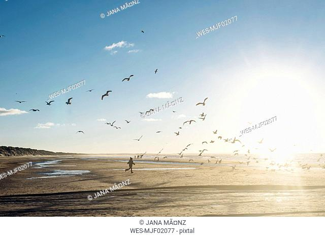 Denmark, Blokhus, boy chasing flock of seagulls on the beach