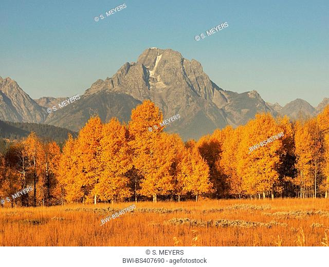 autumn mood at Oxbow Bend with Mt. Moran in the back, USA, Wyoming, Grand Teton National Park
