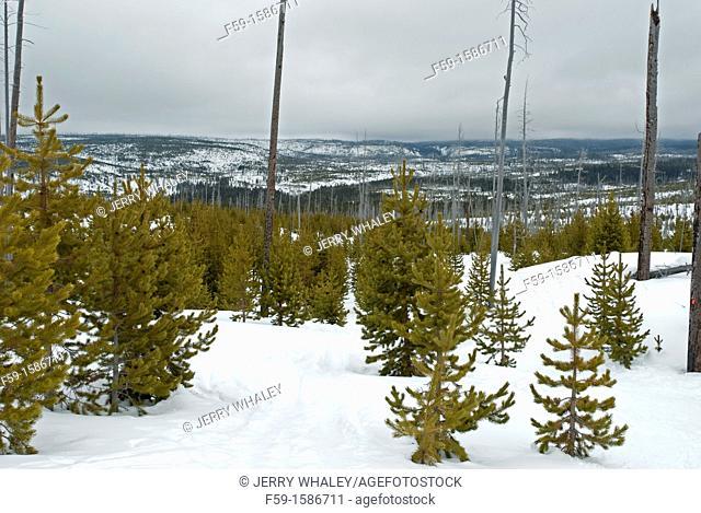 Fern Cascades Loop Trail, Winter, Yellowstone NP, WY