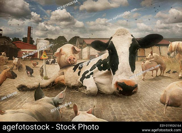 Horse Mating Stock Photos And Images Age Fotostock