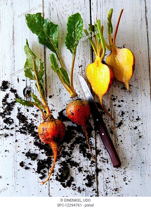 Yellow beet with soil on a wooden background