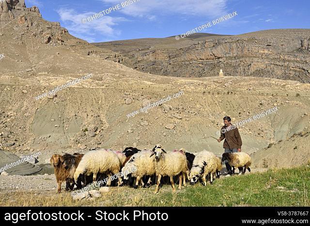 Iran, West Azerbaijan province, Maku region, Baron village surroundings, Shepherd