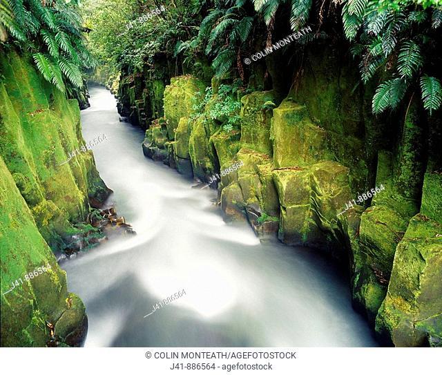 Te Whaiti nui a toi Canyon Whirinaki Forest Park New Zealand