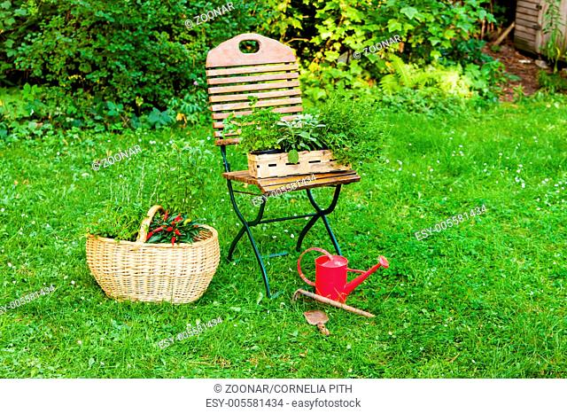 basket with herbs in a garden
