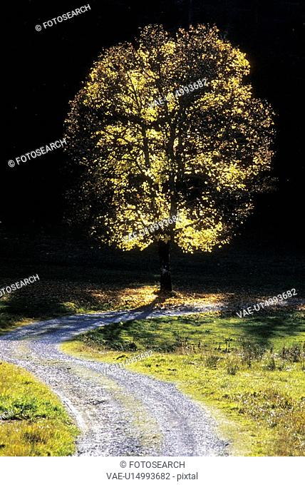 strahl, austria, autumn, away, calf, calm