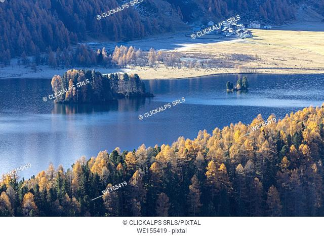 Mist above the blue lake Sils and the colorful woods of autumn Maloja Canton of Graubünden Engadine Switzerland Europe