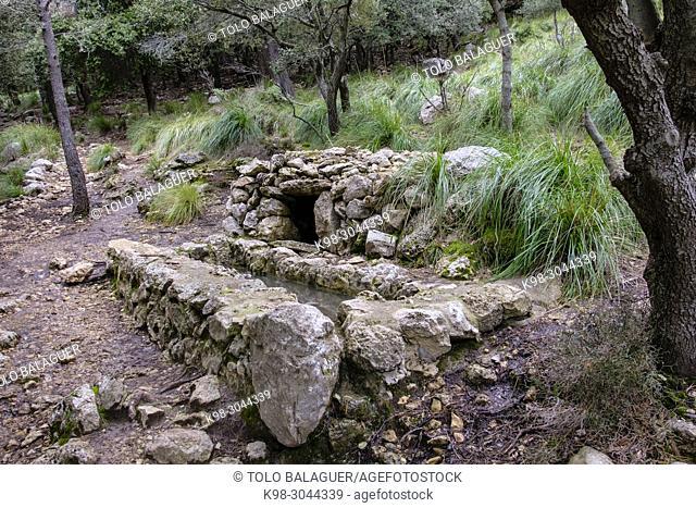 fuente de ses Tosses den Gallina, Escorca, Paraje natural de la Serra de Tramuntana, Mallorca, balearic islands, Spain