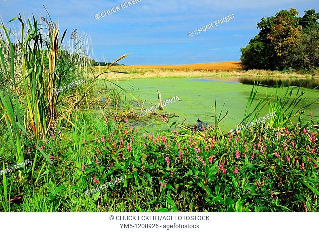 Illinois Lowland with pond, grasses, cat tails & wildflowers