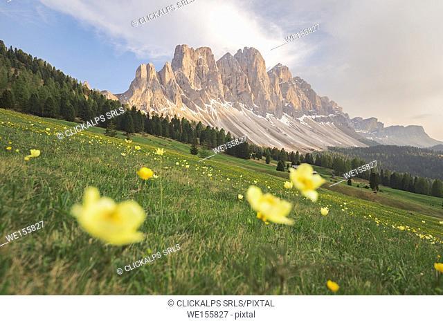 Gampenwiese, Gampen Alm, Val di Funes - Villnoesser Tal, Suedtirol - Alto Adige - South Tyrol, Italy, Europe